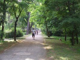 Парк в града